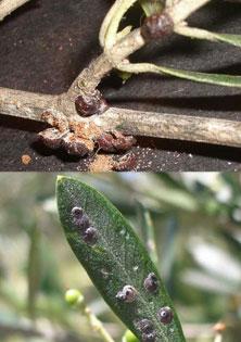 biological-pest