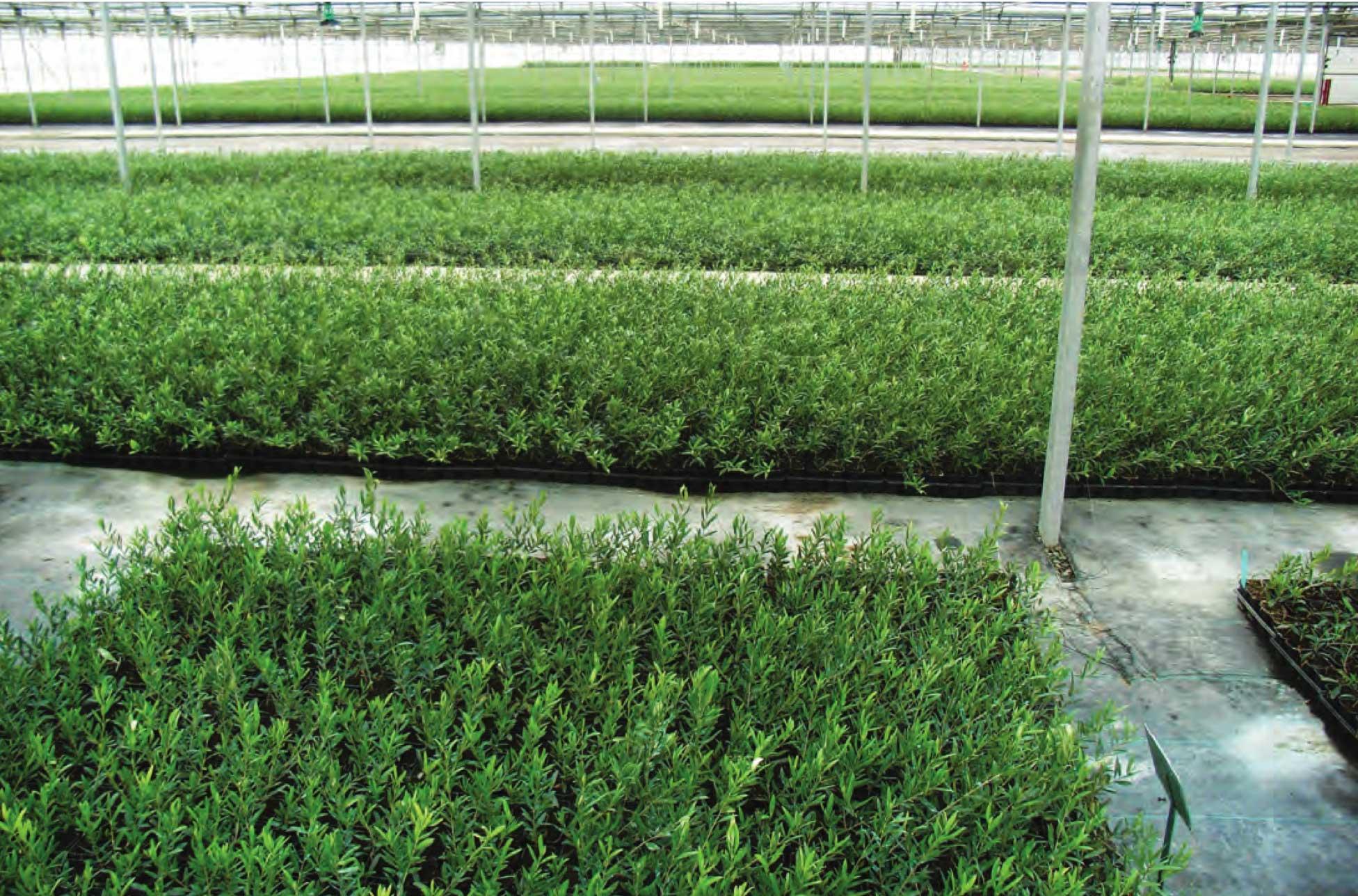 Plant sanitation